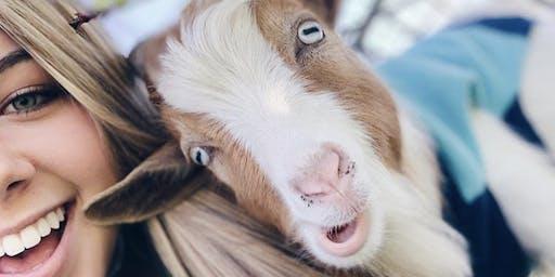 Goat Yoga Richardson!