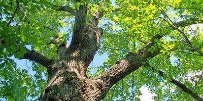 Winnipeg Forest Watch Survey 1: Ash Tree Injection Candidates and Workshop