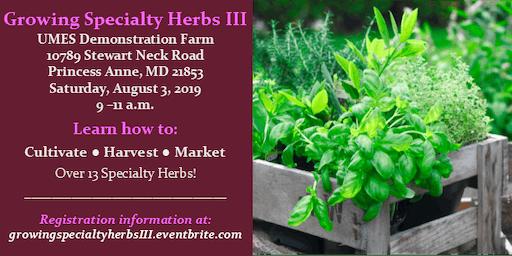 Growing Specialty Herbs III