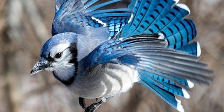Birding Photography Workshop & Photo Walk at Kensington Metro Park tickets