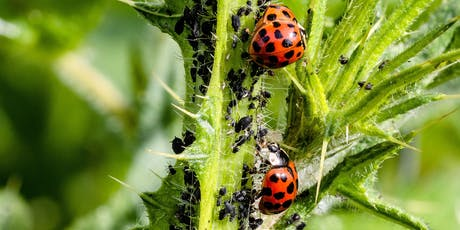 Managing Pests and Diseases in the Veggie Garden  tickets
