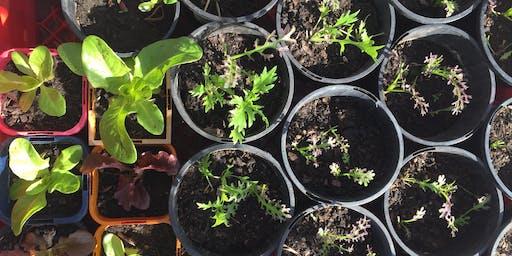 Growing Veggies from Seed