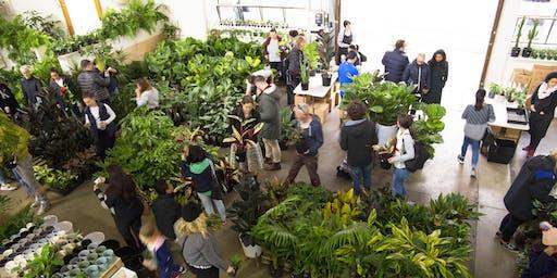 Massive Indoor Plant + Pot Warehouse Sale - Winter Wonderland