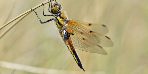 Discover Dragonflies at St Aidan's