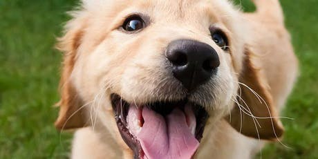 PUPPY MANNERS (LEVEL 1) Saturday, DSPCA  tickets