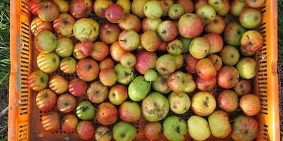 Turning trash into treasure: rethinking food waste