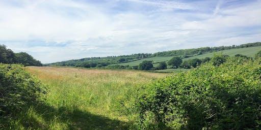 Guildford to Dorking Walk