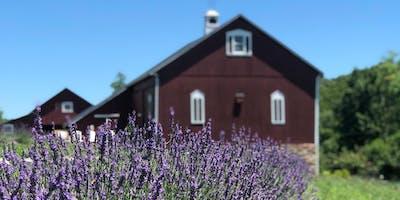 Star Bright Farm Lavender Festival