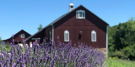 Star Bright Farm Lavender Festival tickets