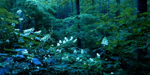 Guided Night Hike with Dr. Pete Van Zandt