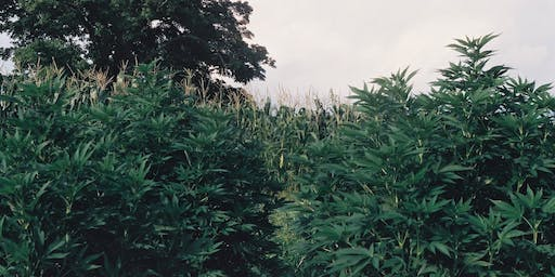 Hudson Hemp Community Tour