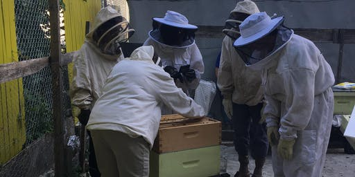 Beekeeping in Community Gardens