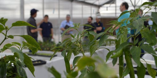 UA Hydroponic Tomato Intensive Workshop