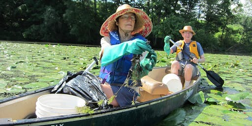 Paddle with a Purpose at the Oxbow Cut-off (MA) - Water Chestnut Pulls