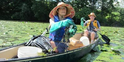 Paddle with a Purpose on the CT River in Holyoke (MA) - Water Chestnut Pulls