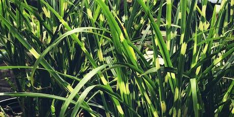 Education Series: Top 10 Ornamental Grasses in the Landscape - Mahomet, IL tickets