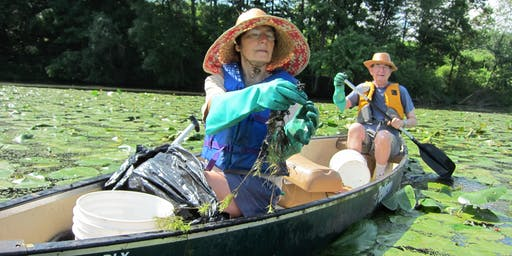 Paddle with a Purpose at the Vinton's Mill Pond (CT) - Water Chestnut Pulls