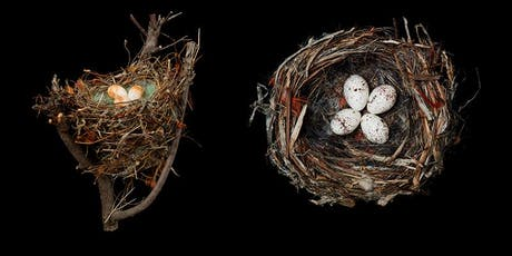 Beyond the Marvel of a Nest: The Survival Challenges of Birds and How We Can Help Them tickets