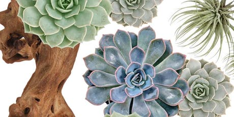 Driftwood and Succulents tickets