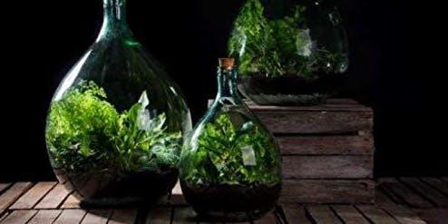 Closed Bottle Terrarium Make & Take