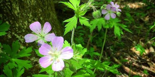 Medicinal Weed Walk: West Brookfield