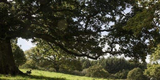 Dunsland rural skills pruning course