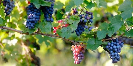 Cata de vinos ecológicos tickets
