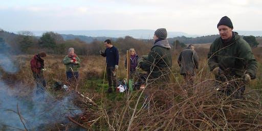 East Devon Heath Week's: Blackhill Quarry Conservation Day