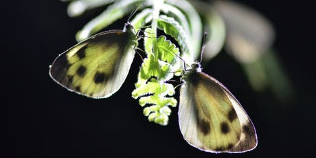 CQI Hong Kong - Eco Tour, Fung Yuen Butterfly Reserve  tickets