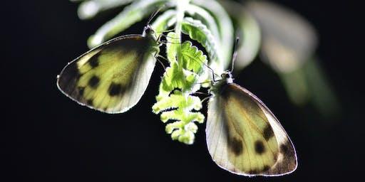 CQI Hong Kong - Eco Tour, Fung Yuen Butterfly Reserve