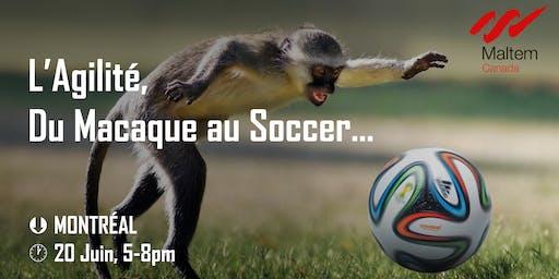 L'Agilité, du macaque au soccer !