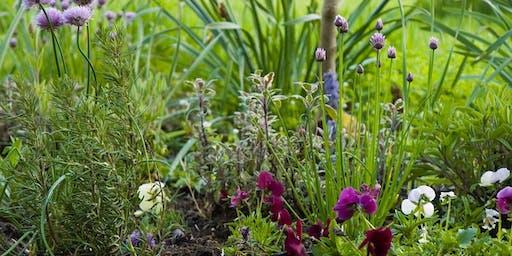 Herb Class: Top 10 Weeds