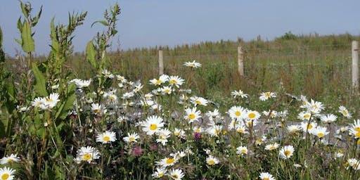 Flowers at Frampton