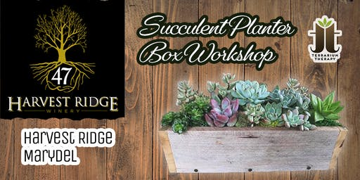 Rustic Box Succulent Planter at Harvest Ridge- Marydel