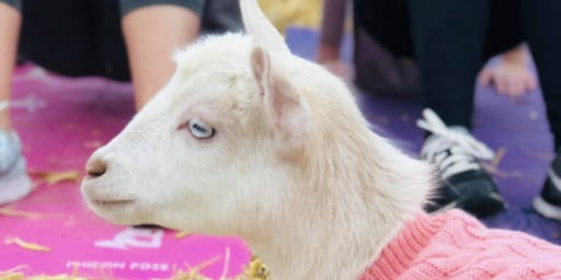 Goat Yoga Nashvill- July Jubilee 2019