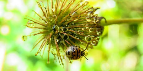 Guided Bug Walk with Professor Stephen Heard and Artist Allison Green tickets