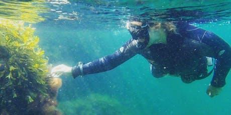 Prova Fridykning / Try Freediving  tickets