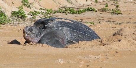 Turtle Talk: A Sea Turtle's Journey tickets