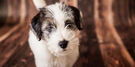 Charla sobre comunicación no verbal canina: ¿entiendes a tu perro? entradas