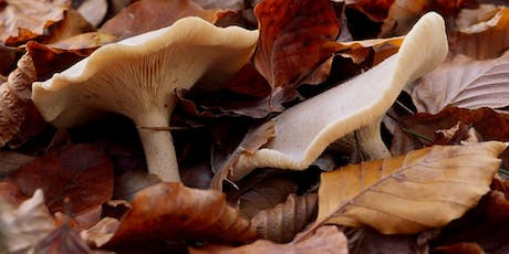 Autumn Fungi Stroll at RSPB Strumpshaw Fen tickets