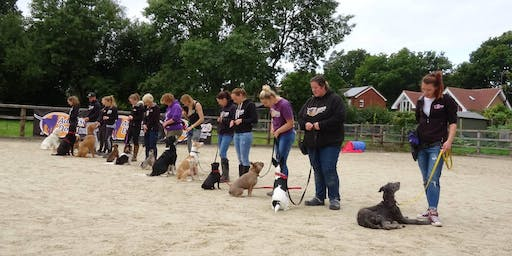 Practical Dog Training Instructor Course