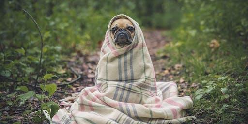 Dog Gong and Massage