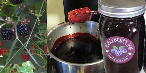 Blackberry Jam Making Class