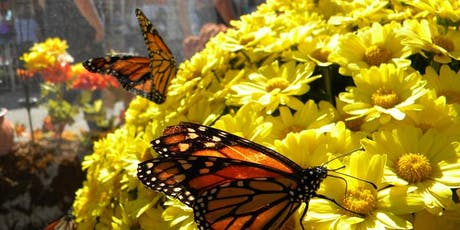 Butterflies at the Arlington County Fair tickets