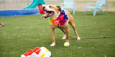 Celebrate summer with a Bark-B-Q photo session