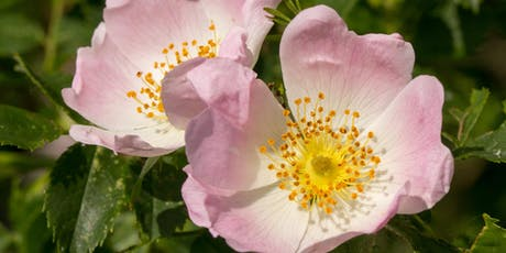 Summer Trees and Flowers in Leigh Woods tickets