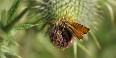 Big Butterfly Count at Kingston Uni - Kingston Bridge House (19/07/2019-11/08/2019)