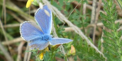 Big Butterfly Count at Kingston Uni - Seething Wells -hedgerows (19/07-11/08/2019)