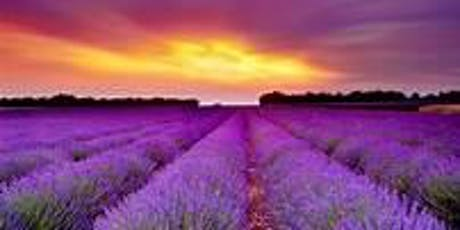 Newlife Lavender and Cherry Farm Tour tickets