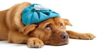 Pet Care Naturally